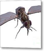 Tsetse Fly Metal Print