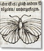 1683 Maria Merian Black Veined White Metal Print
