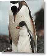 Gentoo Penguin With Young Metal Print