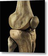 Knee Bones Right Metal Print