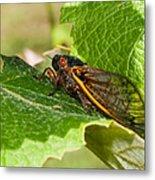 17 Year Cicada 2 Metal Print