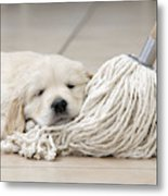 Golden Retriever Puppy Metal Print