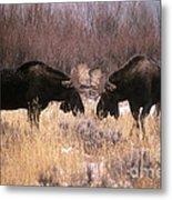 Moose Metal Print by Art Wolfe