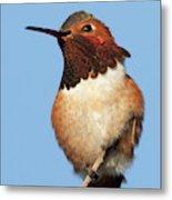 Birds Of The World Metal Print