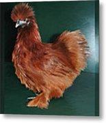 19. Red Silkie Hen Metal Print