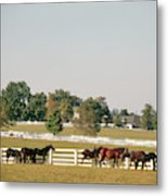 1990s Small Group Of Horses Metal Print