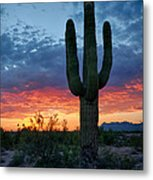 A Saguaro Sunset  Metal Print