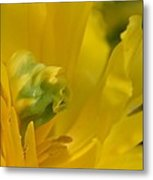 Abstract Parrot Tulip Metal Print