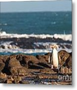 Adult Nz Yellow-eyed Penguin Or Hoiho On Shore Metal Print