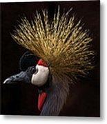 African Crowned Crane Metal Print