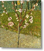 Almond Tree In Blossom Metal Print