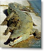 American Crocodile Metal Print