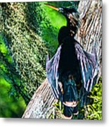 Anhinga On A Cyprus Metal Print by Frank Feliciano