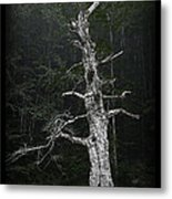 Anthropomorphic Tree Metal Print