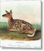 Audubon Deer Metal Print