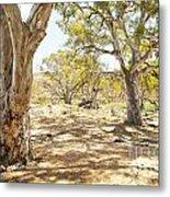 Australian Outback Oasis Metal Print