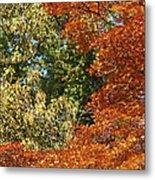 autumn colours in Bavaria Metal Print