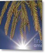 Autumn Coniferous Metal Print