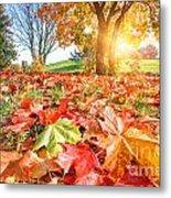 Autumn Fall Landscape In Park Metal Print