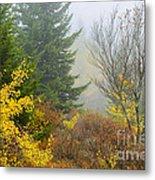Autumn Fog Dolly Sods Metal Print