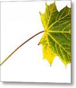 Autumn Maple Leaf Metal Print