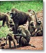 Baboons In African Bush Metal Print