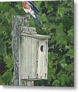 Backyard Bluebird 2 Metal Print