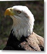 Bald Eagle Portrait Metal Print