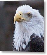 Bald-eagle-profile Metal Print