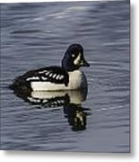 Barrows Goldeneye Metal Print