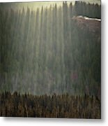 Beams Of Sunlight Shine Over Old Growth Metal Print