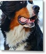 Beautiful Dog Portrait Metal Print