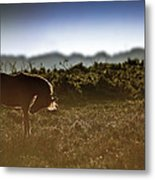 Beautiful Image Of New Forest Pony Horse Backlit By Rising Sun I Metal Print