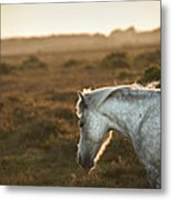 Beauttiful Close Up Of New Forest Pony Horse Bathed In Fresh Daw Metal Print