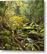 Beauty Creek Metal Print