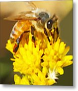 Bee On A Yellow Flower Metal Print