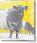 Belted Galloway Cows Metal Print