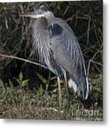 Birds Of The Lowcountry Metal Print