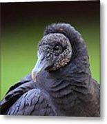 Black Vulture Portrait Metal Print