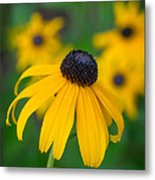 Blackeyed Susan Metal Print