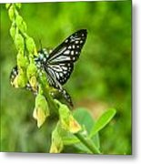 Blue Butterflies In The Green Garden Metal Print