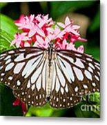 Blue Tiger Butterfly Metal Print