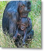 Bonobo Mother And Baby Metal Print