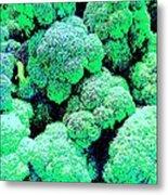 Broccolo Metal Print