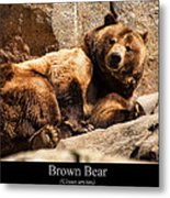 Brown Bear Metal Print by Chris Flees