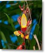 Butterfly Garden Metal Print