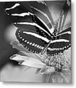 Butterfly In Motion Metal Print