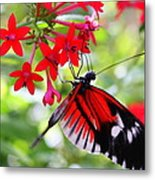 Butterfly On Red Bush Metal Print