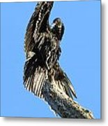 Black Vulture Metal Print