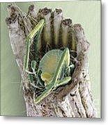 Caddisfly Larva, Sem Metal Print